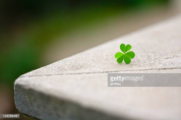 heart shaped clover - annfrau stock photos and pictures