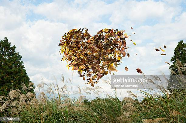Heart shaped fallen leaves in the air