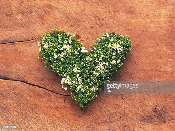 Heart shaped flower wreath on rock, high angle view