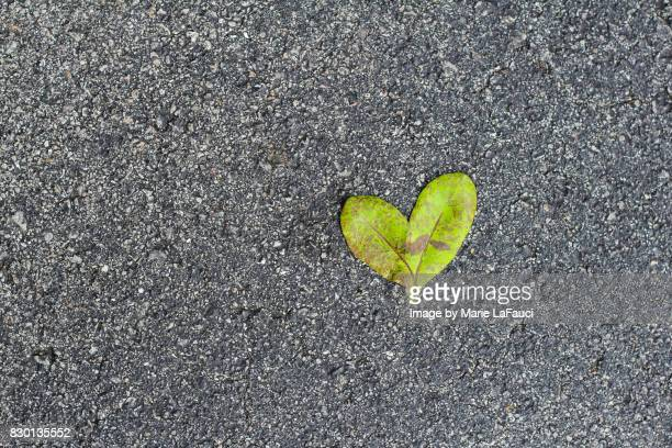 heart shaped leaf on the road - marie lafauci stock pictures, royalty-free photos & images