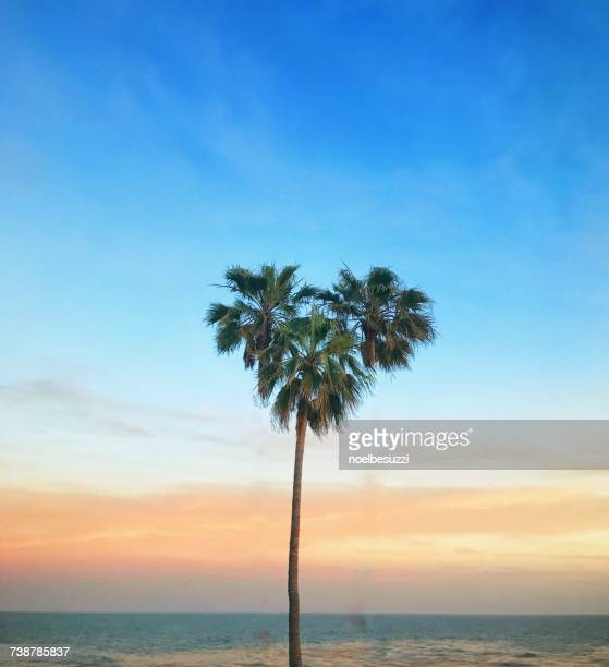heart shaped palm tree, laguna beach, orange county, california, america, usa - laguna beach california stock pictures, royalty-free photos & images