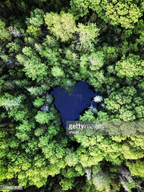 lagoa dada forma coração - meio ambiente - fotografias e filmes do acervo