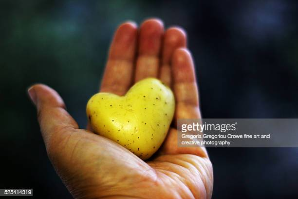 heart shaped potato in hand - gregoria gregoriou crowe fine art and creative photography. fotografías e imágenes de stock