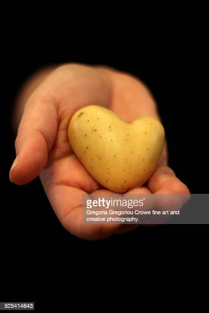 heart shaped potato in hand - gregoria gregoriou crowe fine art and creative photography stock photos and pictures