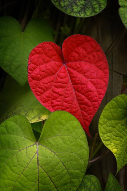 Heart to Take