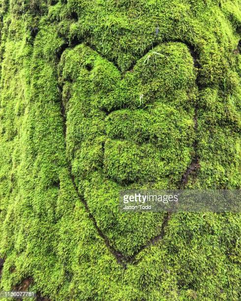 heart with an e carved into a tree with moss - jason todd stock photos and pictures
