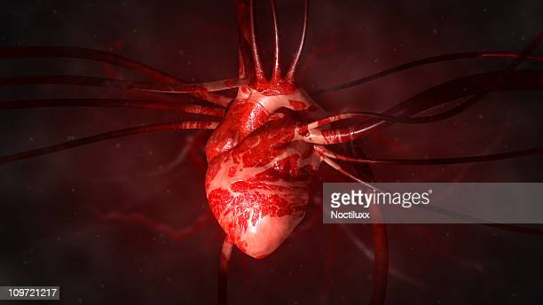 heart with arteries and veins - human heart stock pictures, royalty-free photos & images