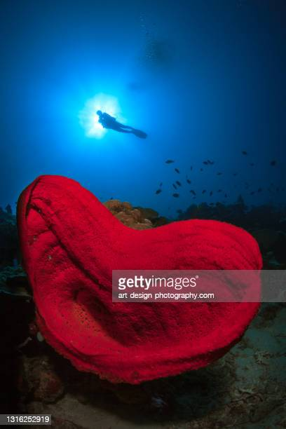 heartformed salvador dali sponge with diver in the sun in gorontalo - central sulawesi stock pictures, royalty-free photos & images
