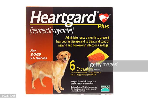 heartgard plus for dogs - tapeworm stock photos and pictures