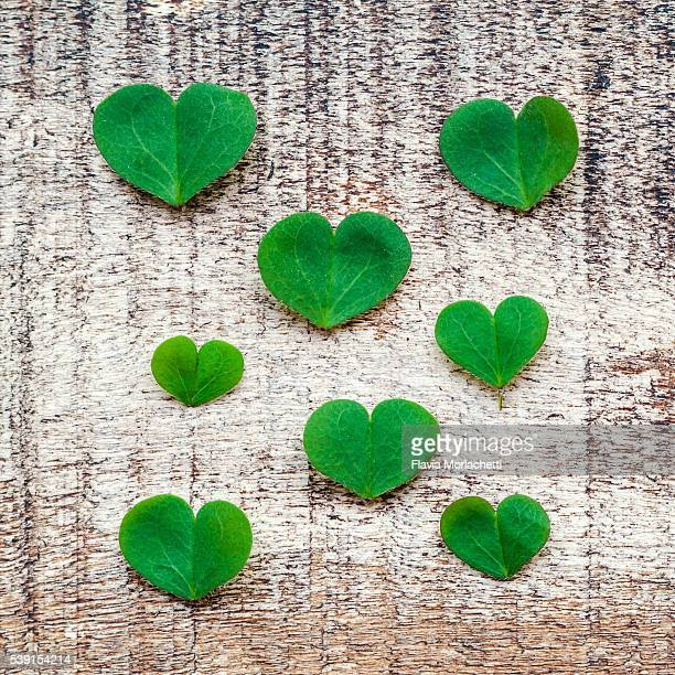 heartshaped clover leaves - clover stock photos and pictures