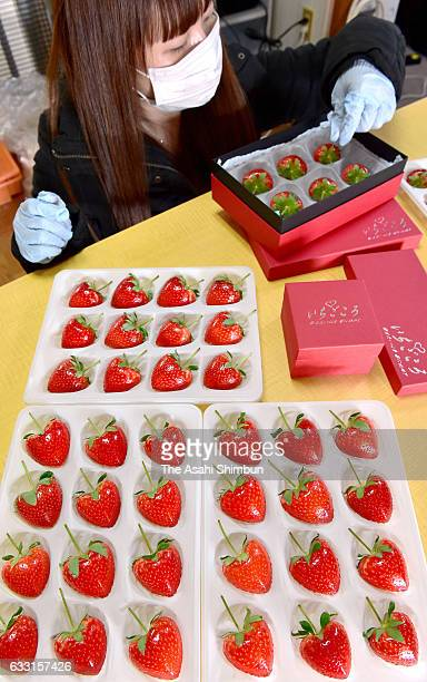 Heartshaped strawberry are prepared for shipping ahead of Valentine's Day on January 31 2017 in Yanai Yamaguchi Japan The rare strawberry called...