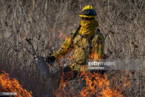 Heat distorts the appearance of a firefighter setting a backfire to protect homes and to try to contain the Blue Ridge Fire on October 27, 2020 in...