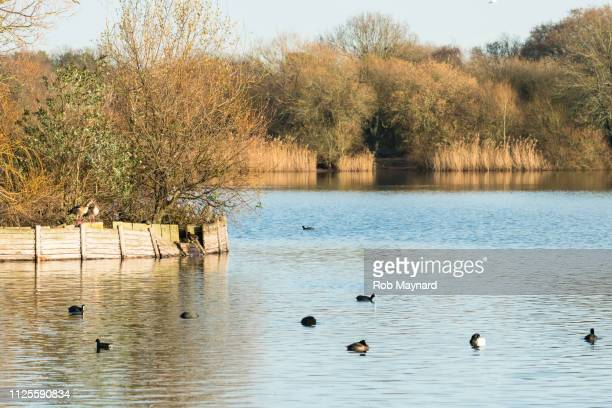 heath pound at petersfield - nature reserve stock pictures, royalty-free photos & images