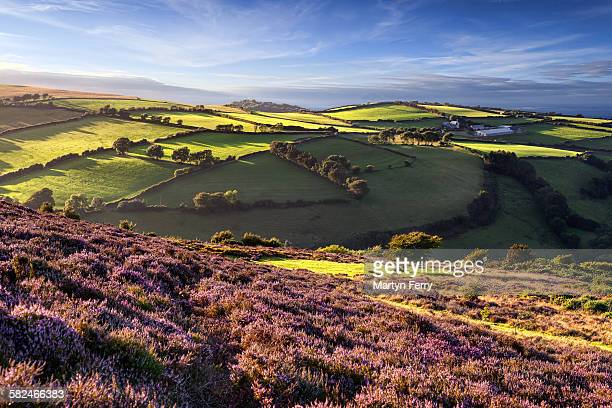 heather coast - somerset england stock pictures, royalty-free photos & images