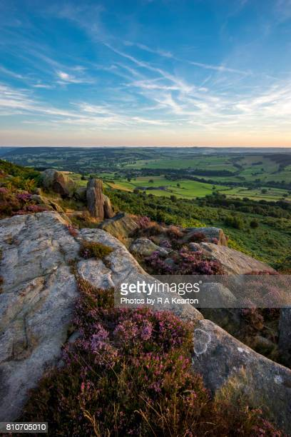 Heather flowering on Baslow edge in the Peak District, England