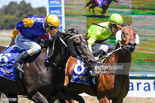 Heather Honey ridden by Jordan Childs wins CE Bartlett Maiden Plate at SportsbetBallarat Racecourse on January 25 2017 in Ballarat Australia