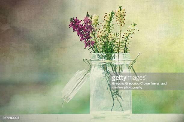 heather in a jar - gregoria gregoriou crowe fine art and creative photography ストックフォトと画像