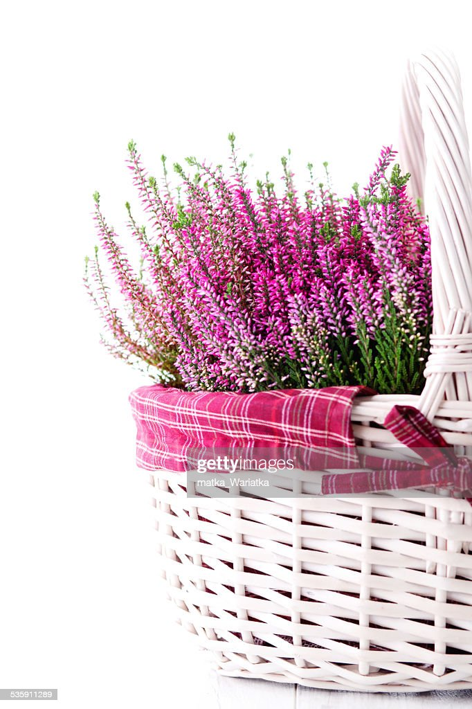 heather : Foto de stock