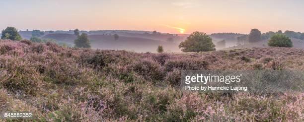 heather sunrise panorama - posbank ストックフォトと画像
