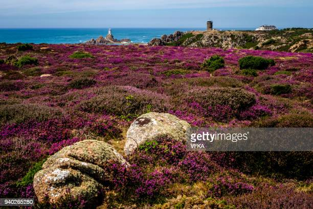 Heathland above Corbière Point, Corbière Lighthouse and WWII German Naval Tower MP2, Jersey, Channel Islands