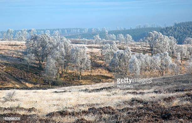 Heathland hills winter Cannock Chase AONB