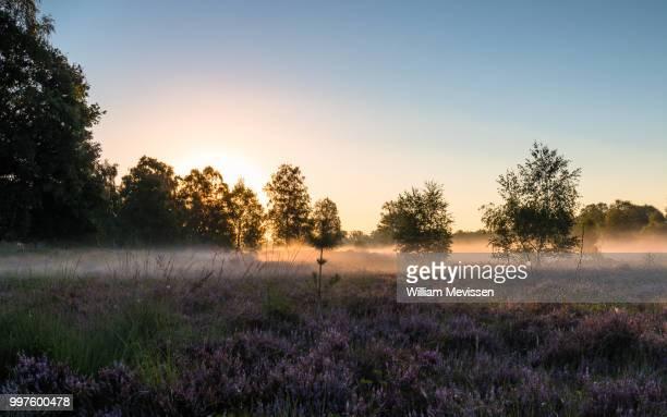 heathland mist - william mevissen stock pictures, royalty-free photos & images