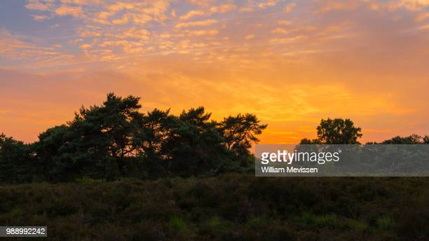 heathland sunset - william mevissen foto e immagini stock