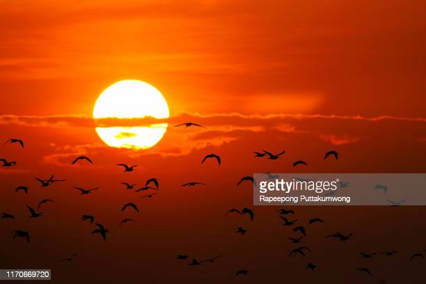 heatwave hot sun. global warming from the sun and burning. climate change. - heatwave stock pictures, royalty-free photos & images
