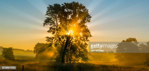 heavenly tree shrouded in fog and backlit by the sunrise. - elysium stock pictures, royalty-free photos & images