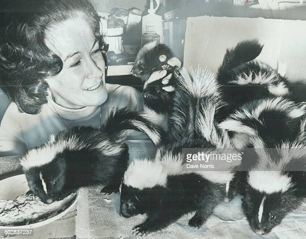 Heavenscent home for 13 skunks When their mother was trapped by the North York pound under a home on Bedford Park Ave 13 baby skunks found a home...