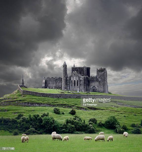 Heavy clouds over Rock of Cashel, sheep grazing on foreground, Cahir, County Tipperary, Ireland