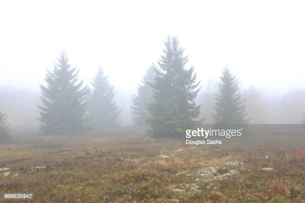 Heavy fog limits visibility in the rural park