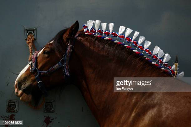 A heavy horse is tethered to its trailer before competing during 152nd the Ryedale Country Show on July 31 2018 in Kirbymoorside England Held in...