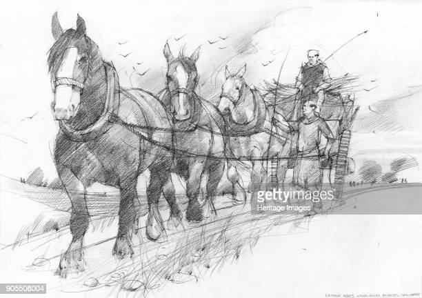 Heavy horses pulling a haycart or goods wagon driven by two medieval Cistercian monks. This illustration is one of a group created to depict scenes...