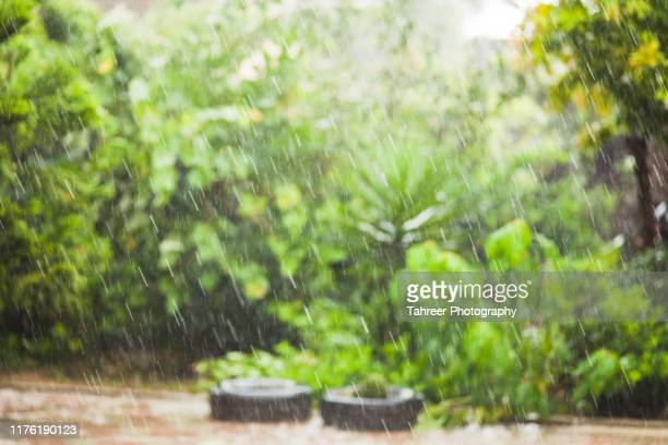 heavy rain in a house lawn - rain stock pictures, royalty-free photos & images