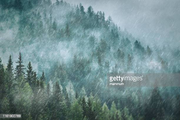 山の中の大雨 - 松林 ストックフォトと画像