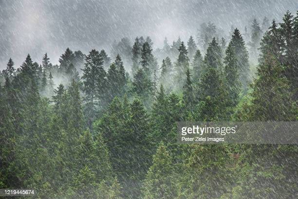 heavy rain in the mountains - meteo estremo foto e immagini stock