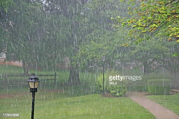 heavy rain in the park - heavy rain stock photos and pictures