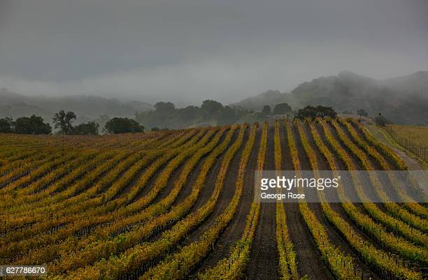 A heavy rainstorm rolls across the vineyards of Happy Canyon on November 26 in Santa Ynez California Because of its close proximity to the Southern...