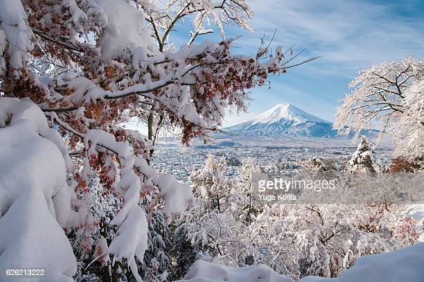 Heavy Snow in Fall—Snowcapped Mount Fuji over Snowcovered Fujiyoshida with Maple Tree with Leaves in the Foreground