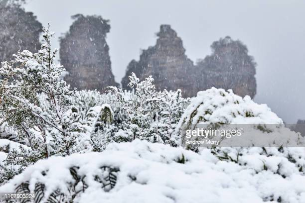 heavy snow on plants with the three sisters rock formation in background, blue mountains, australia - blue mountains national park stock pictures, royalty-free photos & images