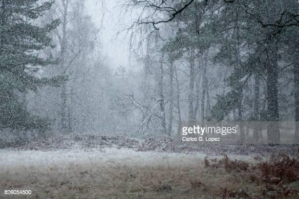 Heavy snow on the woods