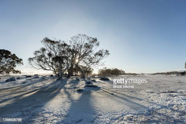 Heavy snow settles near the town of Adaminaby on August 22 2020 in Adaminaby Australia A strong weather system is currently hitting Australia's...