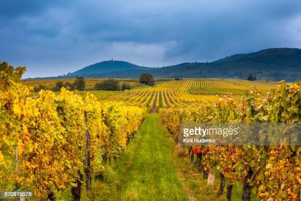 Heavy thunderstorm over Vineyards