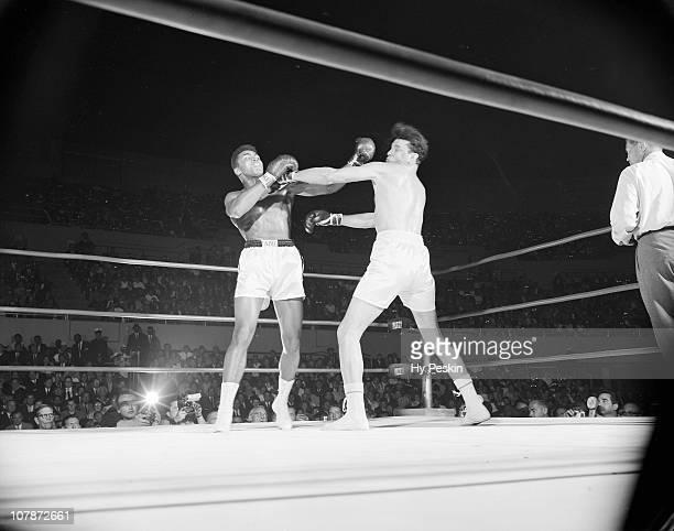 Cassius Clay in action landing left hook vs Alejandro Lavorante at Los Angeles Memorial Sports ArenaLos Angeles CA 7/20/1962CREDIT Hy Peskin