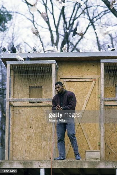 Casual portrait of Mike Tyson outside of his pigeons in coup at the home of his surrogate mother Camille Ewald. Catskill, NY 12/1/1985 CREDIT: Manny...