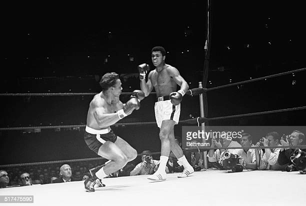 Heavyweight champion Cassius Clay stands over challenger Cleveland Williams as Williams starts down in the 3rd round of their title fight here Clay...