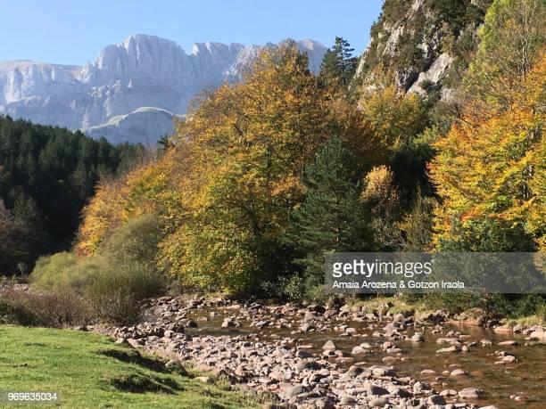 hecho valley. huesca province, spain. - laubbaum stock-fotos und bilder