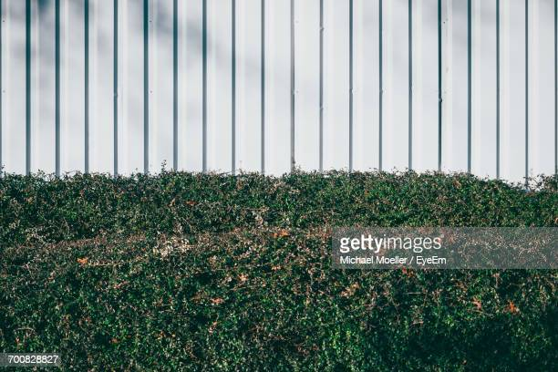 green hedge fence ストックフォトと画像 getty images