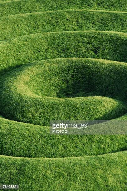 Hedge garden maze